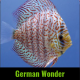 Discus german wonder