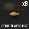 Lot de 8 danio choprae