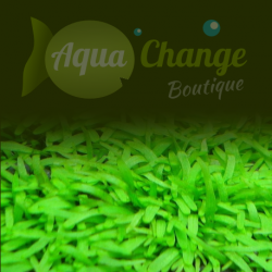vente en ligne de plantes vertes d 39 aquarium 2 aquachange boutique. Black Bedroom Furniture Sets. Home Design Ideas