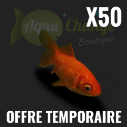 Lot de 50 poissons rouges