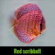 Discus red scribbelt