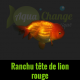 ranchu tête de lion rouge