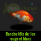 boutique internet ranchu tête de lion rouge et blanc