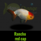 Achat ranchu red cap