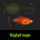platy wagtail rouge