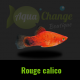 platy rouge calico