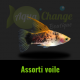 platy voile