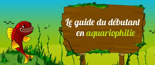 Guide pour bien d marrer son premier aquarium for Boutique aquariophilie