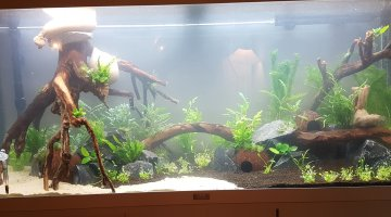 Aquascape 240l