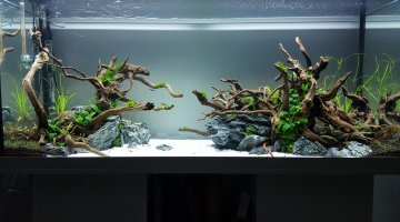 Nature aquascape (120*40*50)