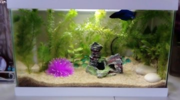 Aquarium 17L low Tech Betta