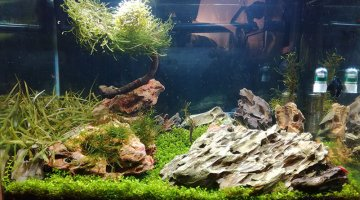 Aquascape 57L