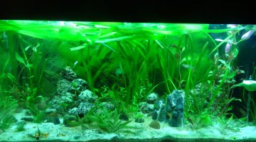 Moisissure Sur Decor Aquarium