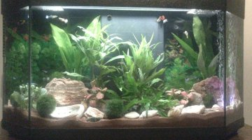 96 litres guppy, platy, molly et RC