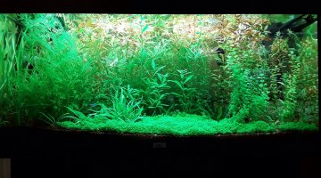 Aquascape amazonien