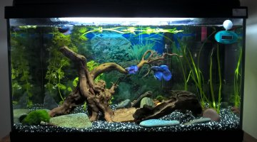 60l bettas et tylo plus en service