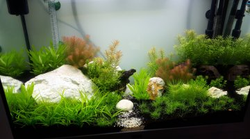 120L_Aquascaping_Crevette