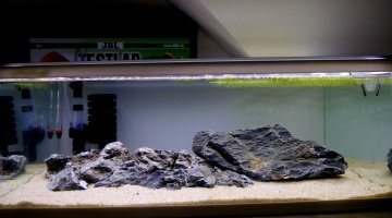 Aquascaping 21L