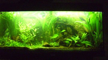 rio 180 semi-low tech