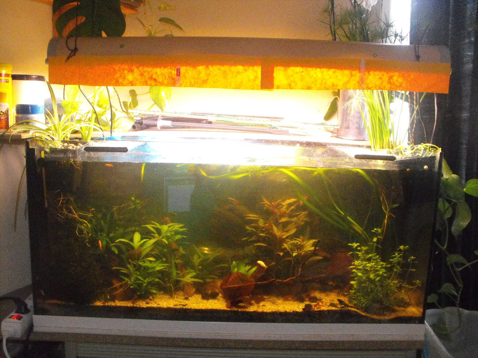 aquarium low-tech de 140 litres