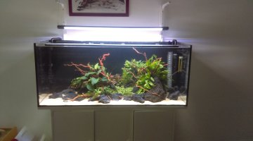 240l style aquascaping