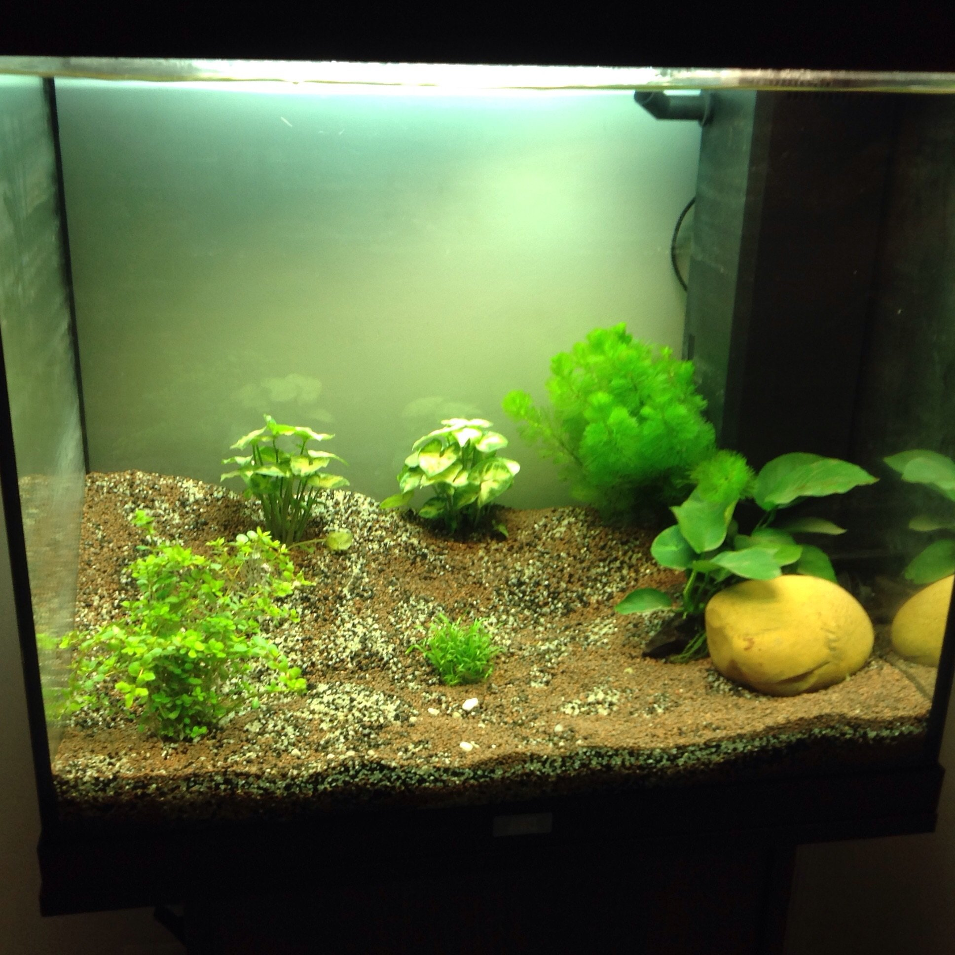 les plantes dans l 39 aquarium de 120 litres. Black Bedroom Furniture Sets. Home Design Ideas