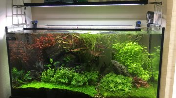 Jungle 200 litres