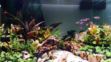 Aquascape 73L