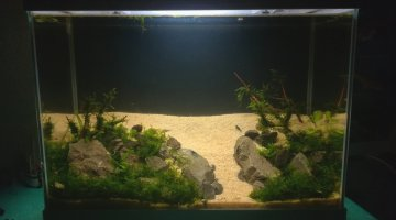 20L aquascaping