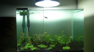 Scapers tank 35L