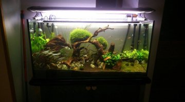 200l aquascape