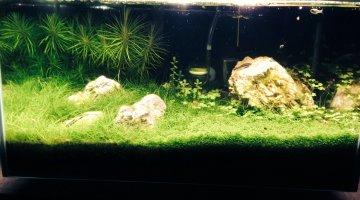 Fluval edge aquascape
