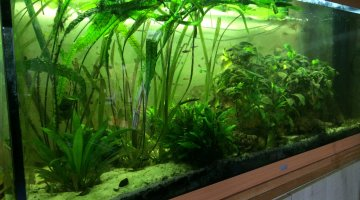 River run amazonie 450L discus