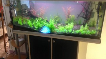 280 LITRE aquascape