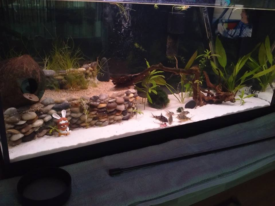 Realisation Decor Aquarium