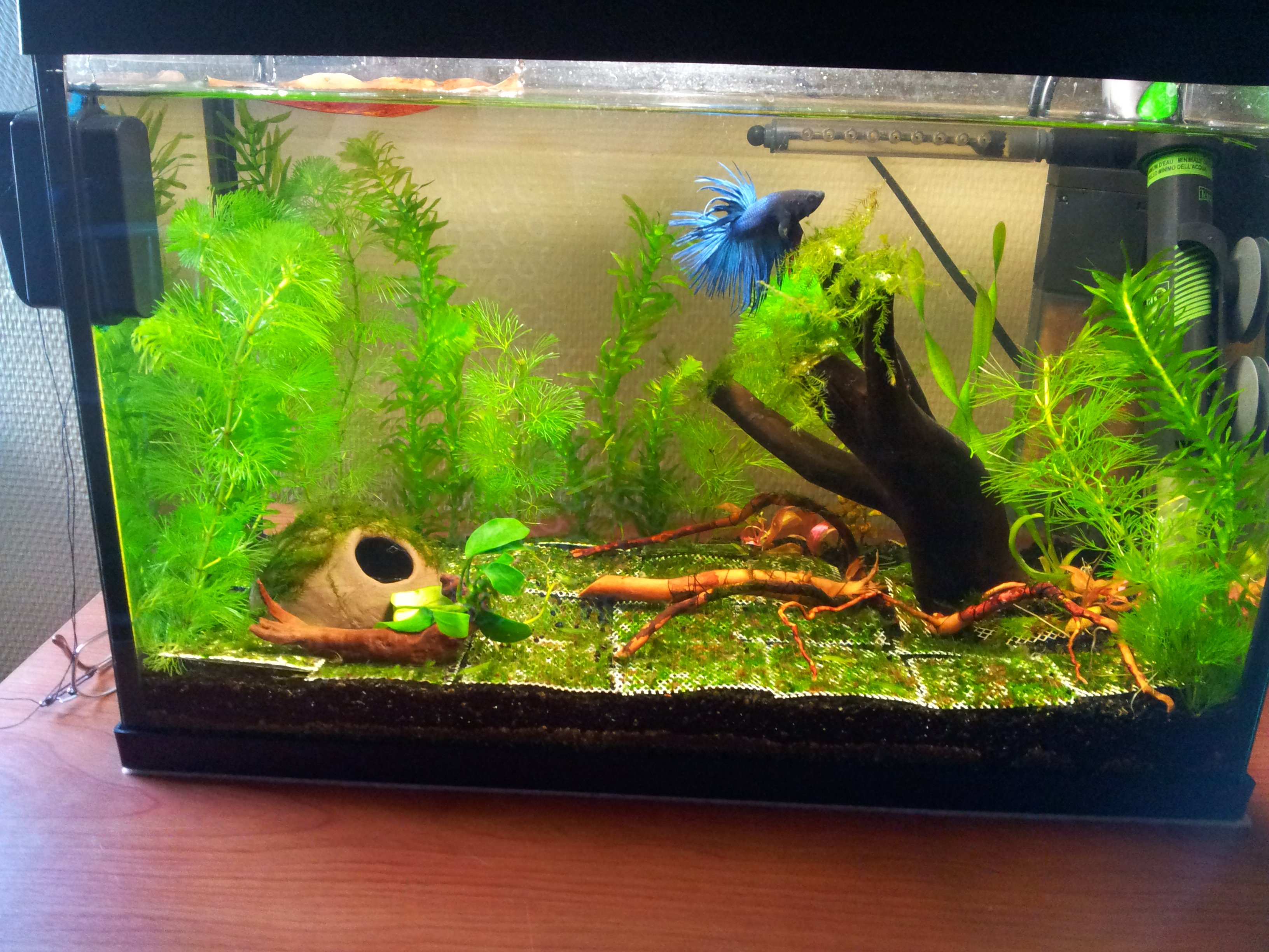 Nouvelle version de l'aquarium de 20 litres pour le Betta Splendens