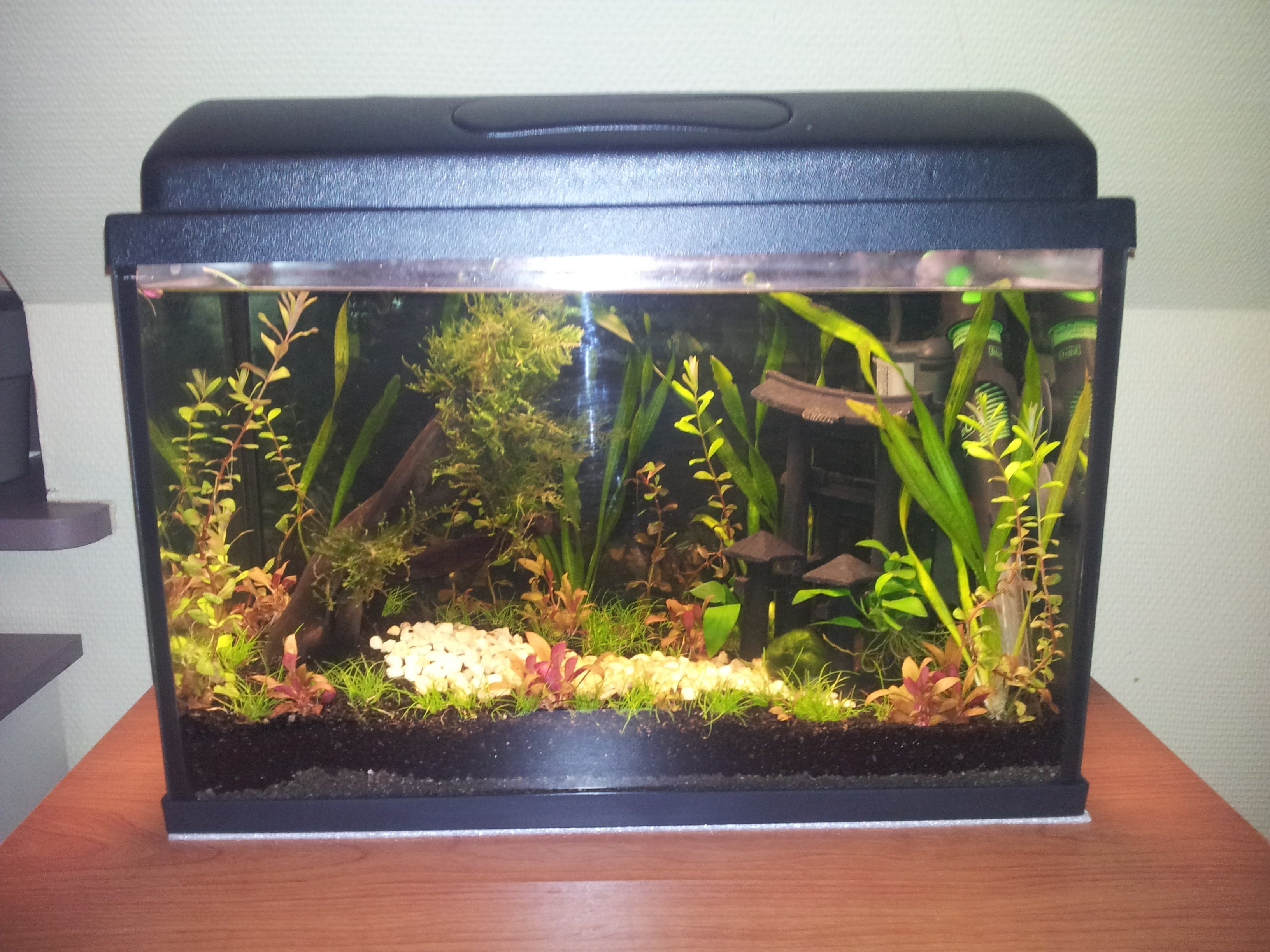 Aquarium de 20 litres betta splendens for Quand changer eau aquarium poisson rouge