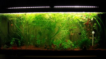 120L Bac Jungle Green