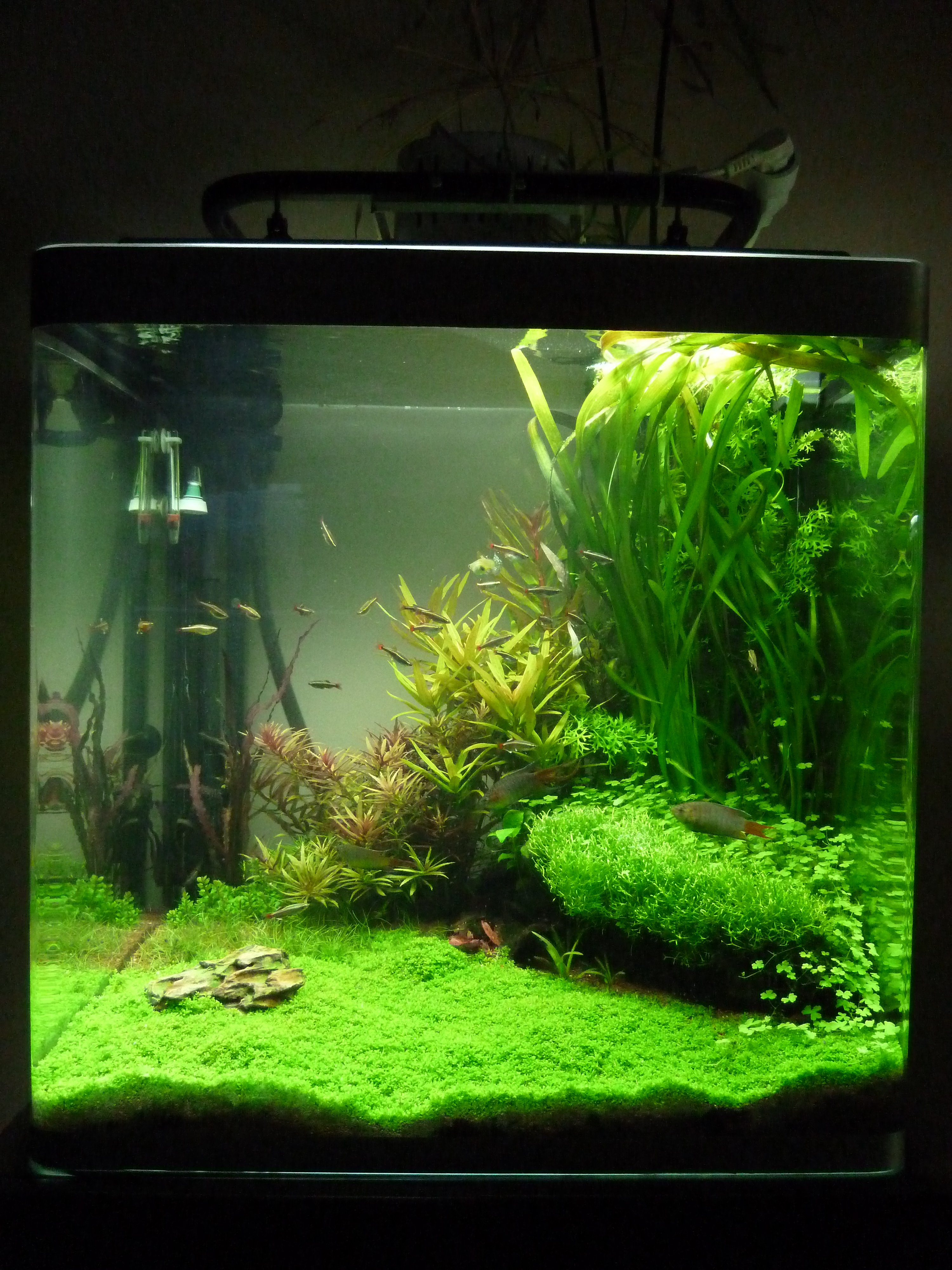 Osaka 155 aquascaping