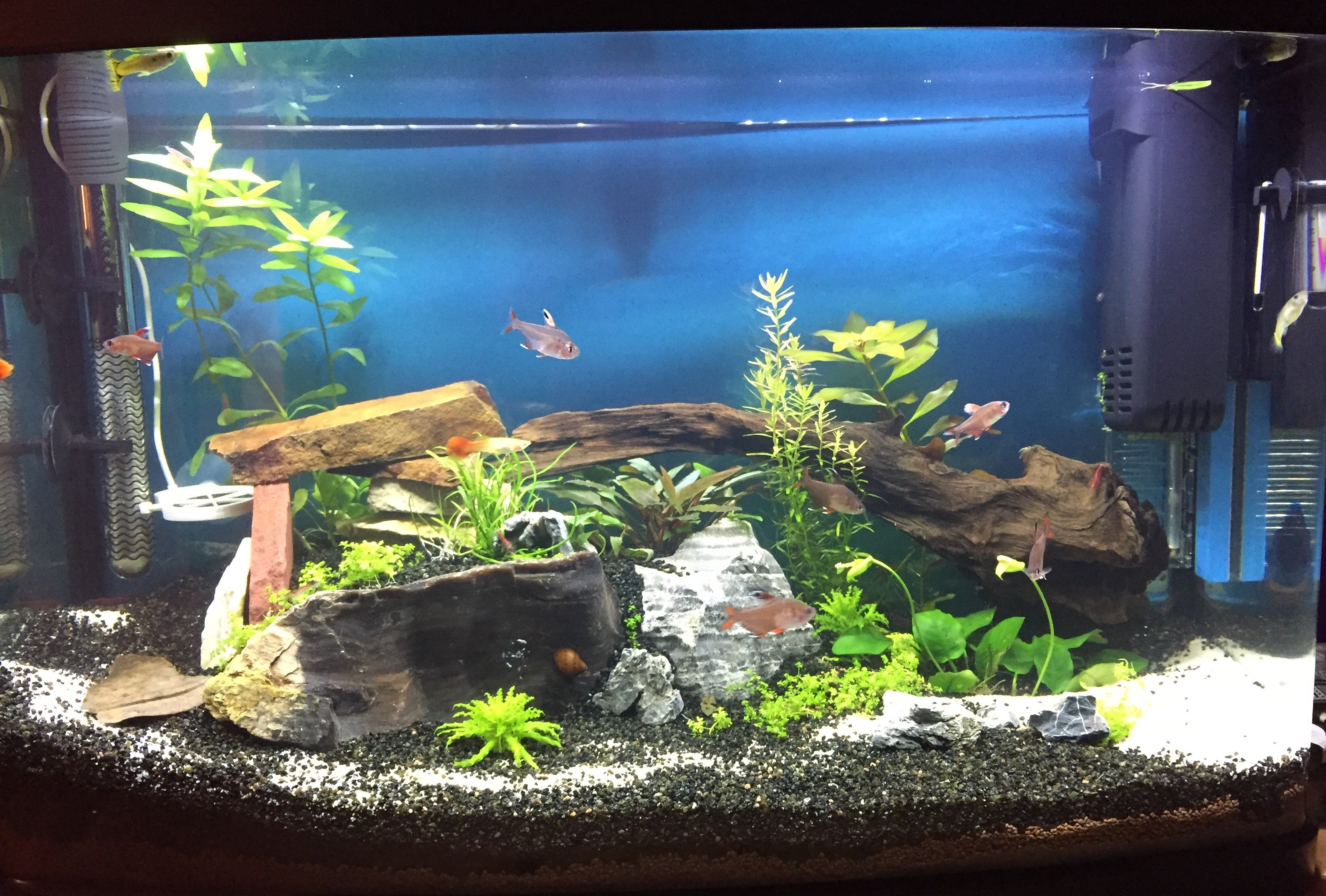 D co aquarium sympa for Decoration pour aquarium d eau douce
