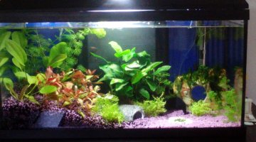 50l asie / red cherry
