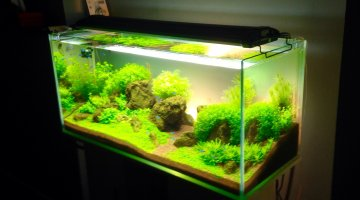 Aquascape (100x45x40)