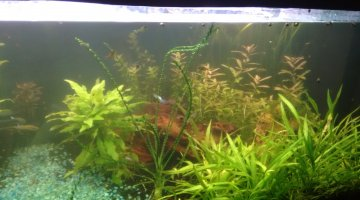 600L low-tech parental