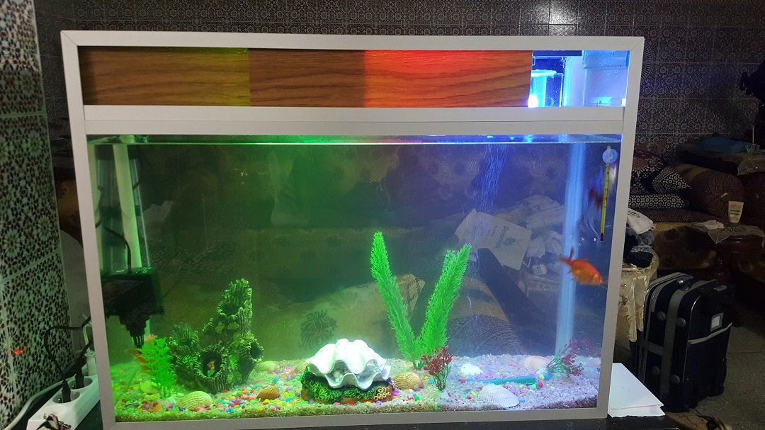 aquarium de poisson rouge