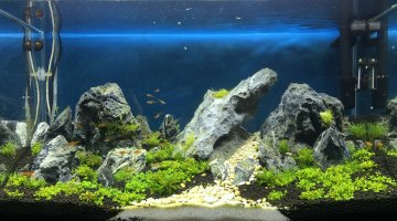 Coh rence dans le d cor de diff rents aquariums for Decoration pour aquarium d eau douce