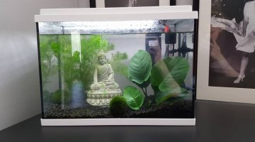 Quels poissons pour un aquarium de 15l for Petit aquarium boule