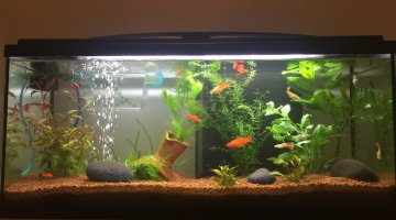 100 litre platy/xipho