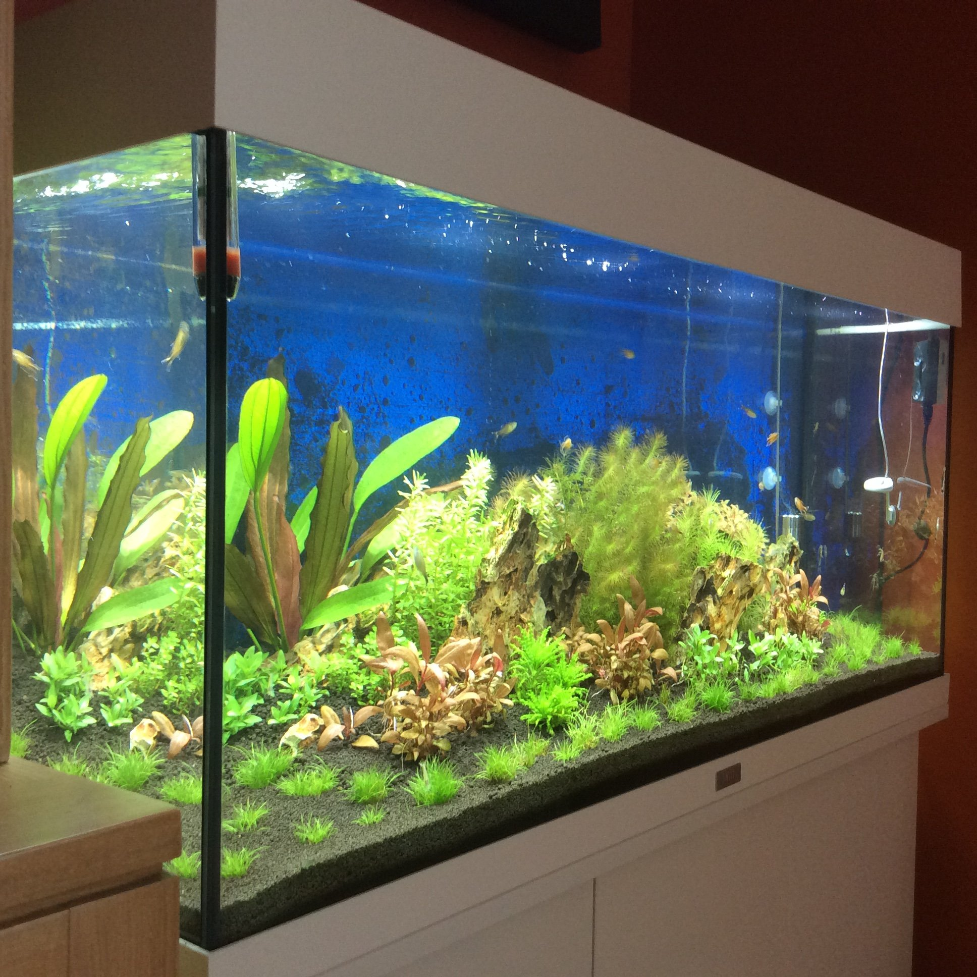 aquarium 180 litres amazonien quelle population. Black Bedroom Furniture Sets. Home Design Ideas