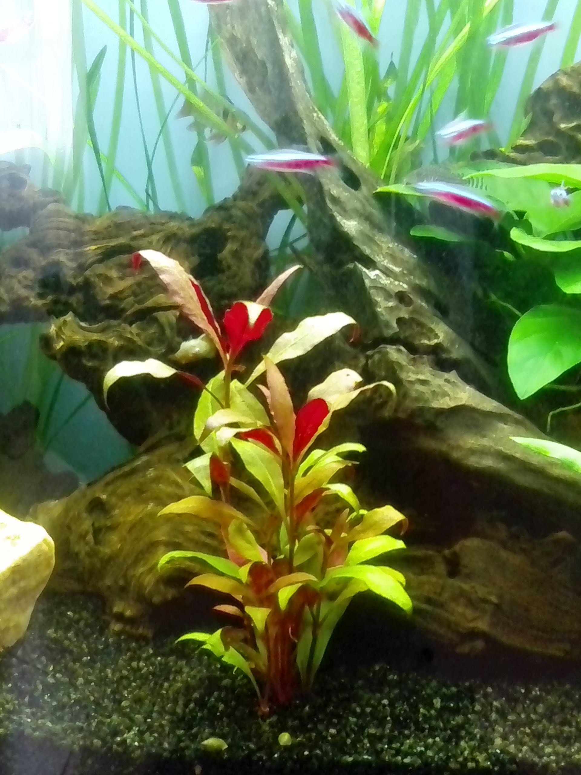 Plante rouge biotope amazonien