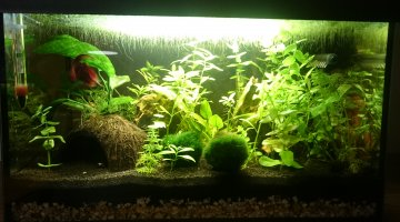 25L Low Tech Betta